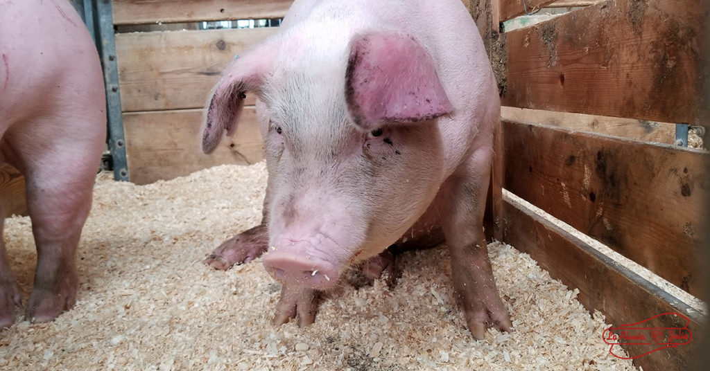 carne cerdo ainttinflamatorio